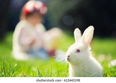 Easter rabbit in Green Grass with small child and rabbits in the background blurred