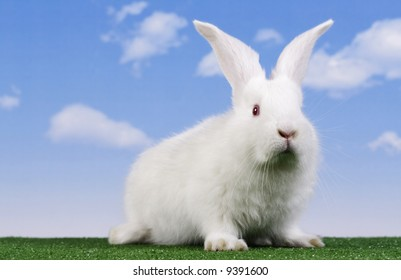 Easter. The rabbit with a sky background