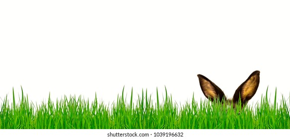 easter rabit and grass
