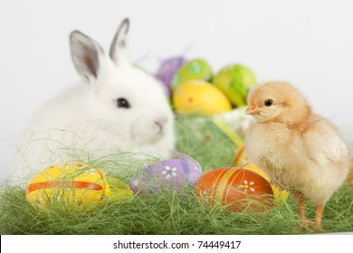 Easter set up with one red baby chicken, many painted eggs and one cute white bunny. Focus is on the chick. High resolution image taken in studio.