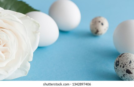 Easter white and quail eggs on blue background