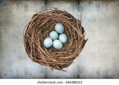 Eastern Bluebird Nest with Five Blue Eggs Against Wood Background