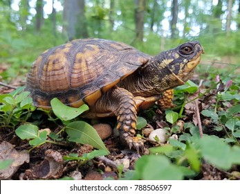 Image result for free images land turtle