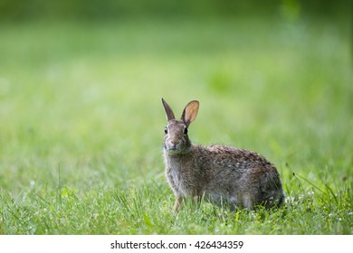 Animal Tracks ID