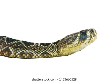 Eastern diamondback rattlesnake isolated on white