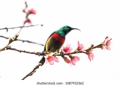 Eastern (forest) double-collared sunbird on a tree branch.