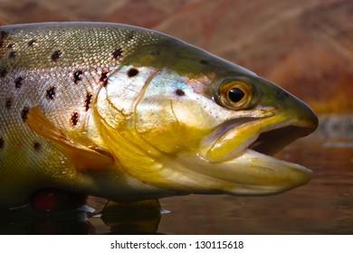 Eastern Oregon fly fishing
