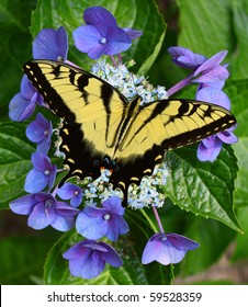 Yellow and Black Butterfly Images, Stock Photos & Vectors | Shutterstock