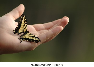 An Eastern tiger swallowtail butterfly on an outstretched hand.