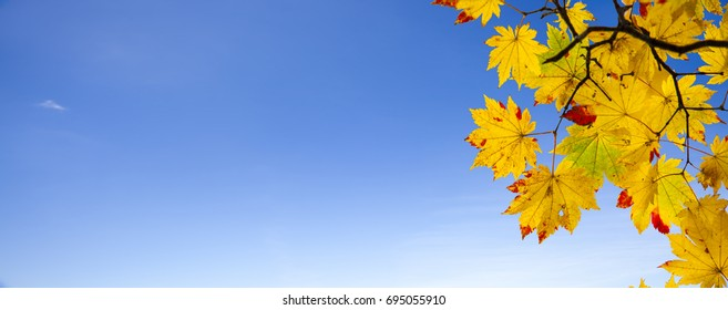 The easy picture beautiful maple autumn landscape background