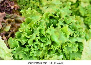Eatable Produce - Leaf lettuces
