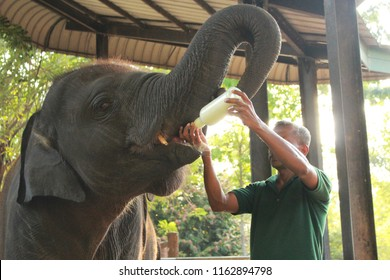Eating elefant in the national Zoo park Udawalawe, Sri Lanka 2018