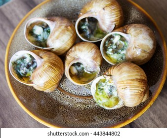 Eating the fried snails in garlic butter