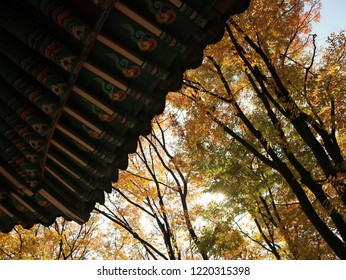 The eaves are the edges of the roof which overhang the face of a wall and, normally, project beyond the side of a building. Korean traditional style eaves in Autumn. With yellow trees.