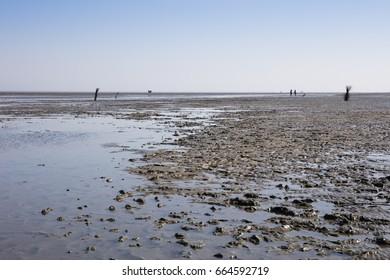 Ebb tide, National park wadden sea, Lower saxony, Germany, Europe