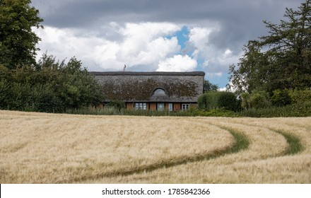 Ebeltoft, Denmark - July 17th 2020: Old historic timbered red house with thatched roof behind green bushes and a wheat field with tractor tracks