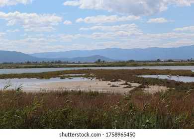 Ebro Delta / Spain - June 13 2020: Panoramic view on the green rice fields, captured at the Ebro Delta
