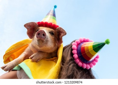 Eccentric slim woman with a hat, long hair and glasses plays with a funny red piglet in hat for party. Hands close-up. Copy space. 2019 Year of Yellow Pig