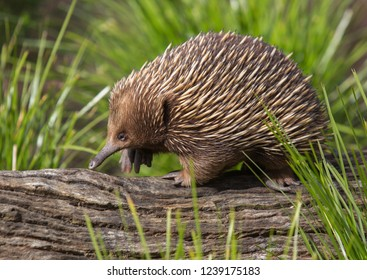Echidna in the Zoo