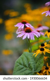 echinacea, black eyed susan, coneflowers, rudbeckia flowers with a shallow depth of field