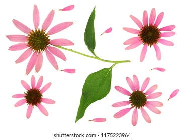 Echinacea flowers isolated on white, top view.