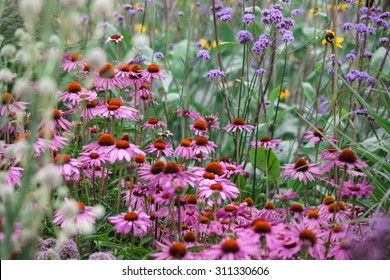 Echinacea with other wild flowers