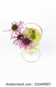 Echinacea purpurea flower in tea cup on white