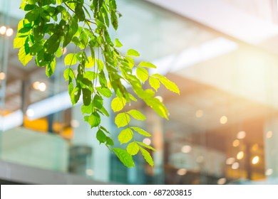 eco building or green office plant tree and garden in city concept.