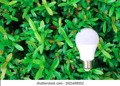 Eco concept - Energy saving  LED bulb with lighting in the green nature background and area for copy space.