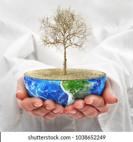 Eco concept. Hands hold a half planet with dead tree. Save the planet.