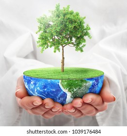 Eco concept. Hands hold a half planet with tree. Save the planet.