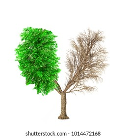 Eco concept. The tree have a shape of human lungs. One side without leaves, the other with leaves isolated on a white background. Change seasons.