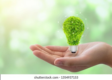 eco concept: variety of light bulbs with plant inside.hand holding eco light bulb, save energy concept