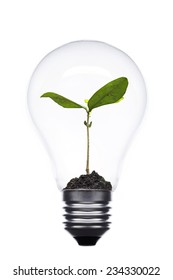 eco concept  variety of light bulbs with plant inside
