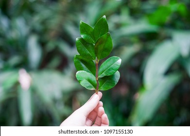 Eco conscious concept with person holding leaf in hands, Enviromental friendly background
