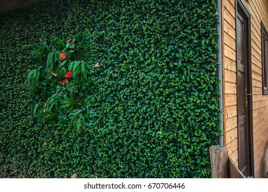 Eco green wall for the wooden house technology