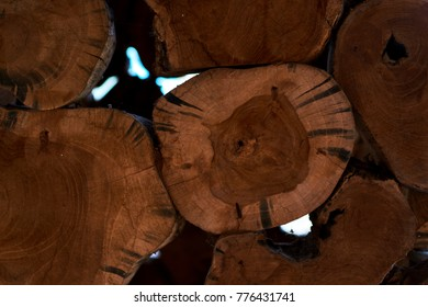 Eco natural wooden decor of tree light brown round stumps wallpaper.  Wood face cut texture pattern background. Round teak wood stump background can use as wallpaper. Tree stumps, natural wood.