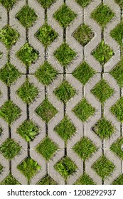 Eco permeable pavement with grass growing through it. Environmentally friendly green parking.