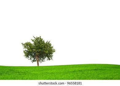 Eco season