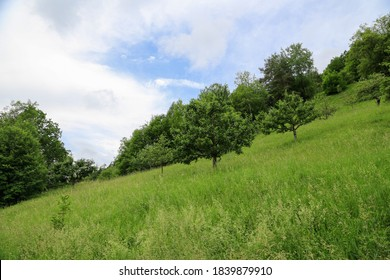 Eco-farming: Hillside plot with fruit trees in a meadow at the edge of a forest called Steigerwald in Bavaria, Germany