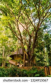 Ecolodge duplex treehouse, set in Luxurious resort, within the forest jungle and trees. Shot in krabi, Thailand, Asia.