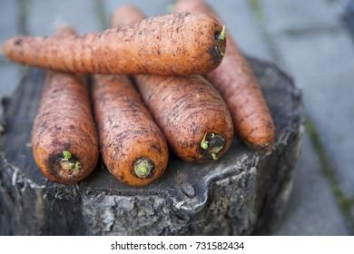 Ecologic carrots on a old grey wood. Grey stone background. Daylight