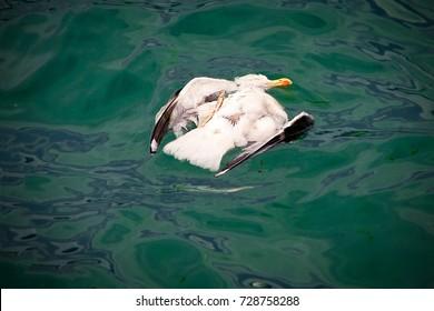 Ecological disaster, extinction of birds, oil spill.
