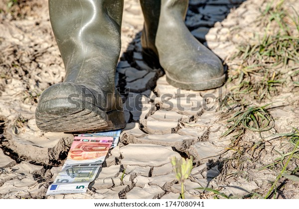 Ecological footprint of agriculture. Farmer walks with rubber boots over euro notes that lie on dry ground. How much is the environmental damage from intensive agriculture?