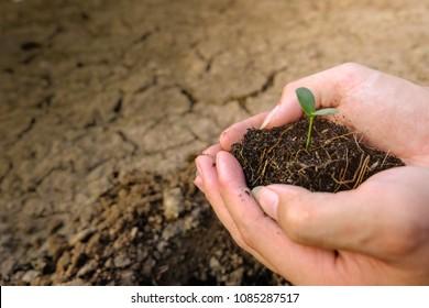 Reforestación Images, Stock Photos & Vectors | Shutterstock