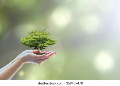 Ecological friendly and sustainable environment concept with tree planting growing on volunteer's hands
