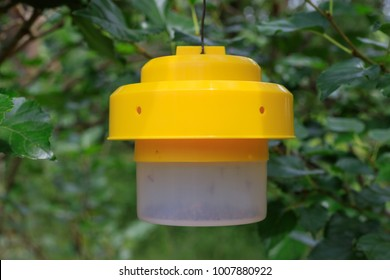 Ecological insect and fly traps In the garden.