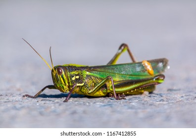Ecological locust close up landscape