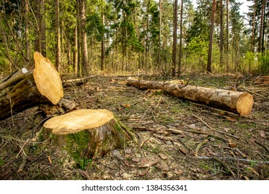 ecological problems. tree felling. loggers. bark beetle. destruction of nature