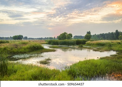 Ecological wetland